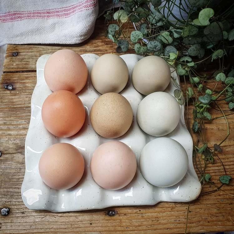 Äggfat 9 ägg, vitt