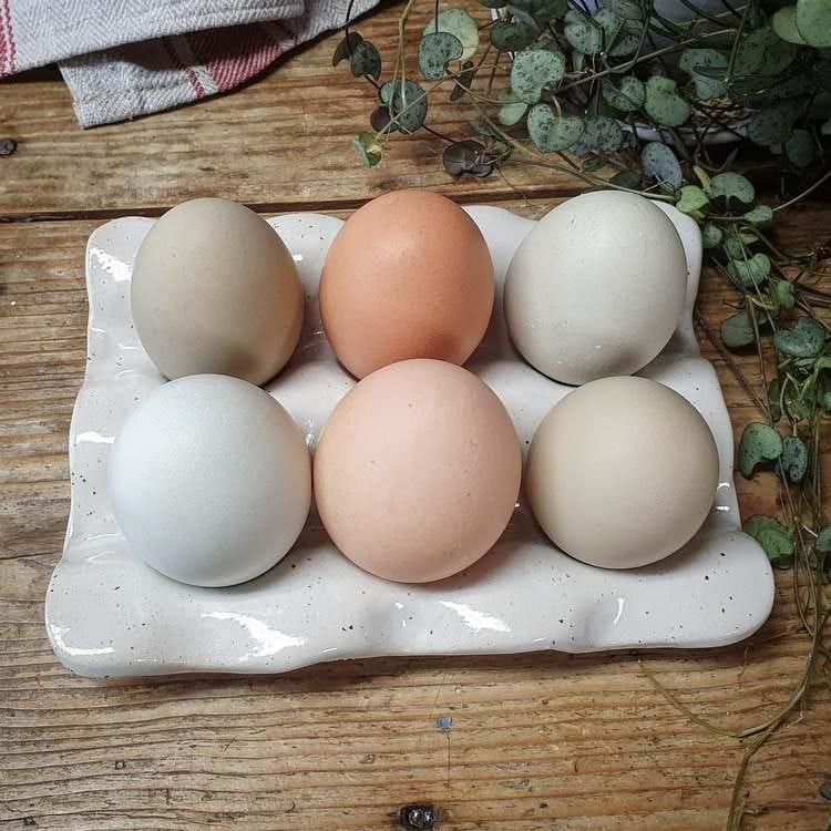 Äggfat 6 ägg, vitt