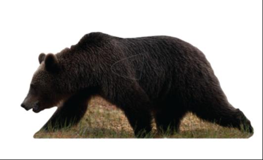 Björn - Naturlig storlek