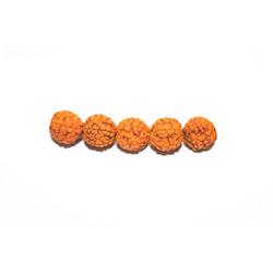 Rudraksha, pärlor