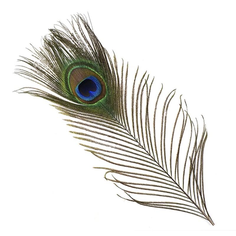 Påfågelfjädrar, 2 st
