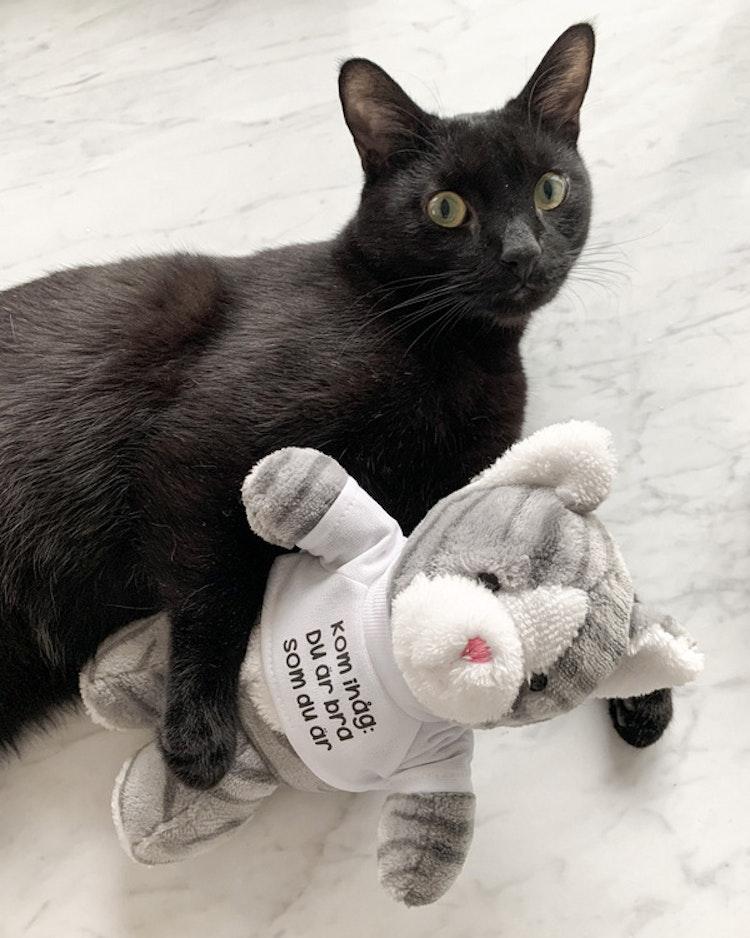 Gosedjur: Katt med t-shirt