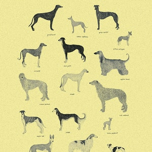Sixteen sighthounds
