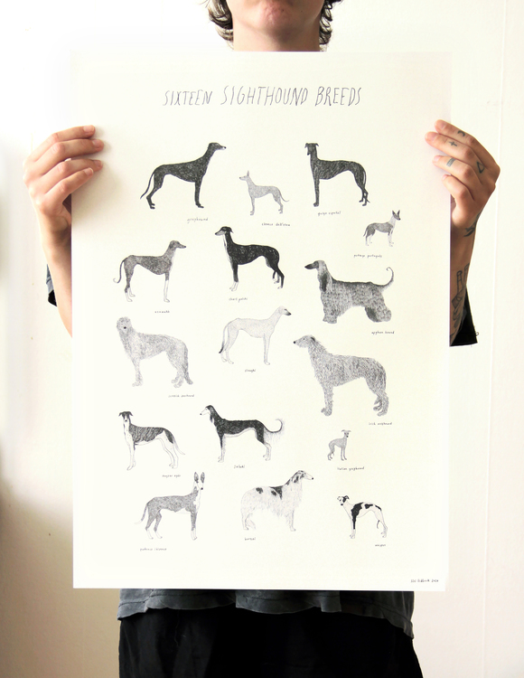 Sixteen sighthounds