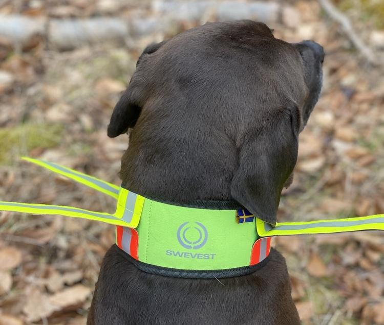 Reflektierendes Halsband für Jagdhunde