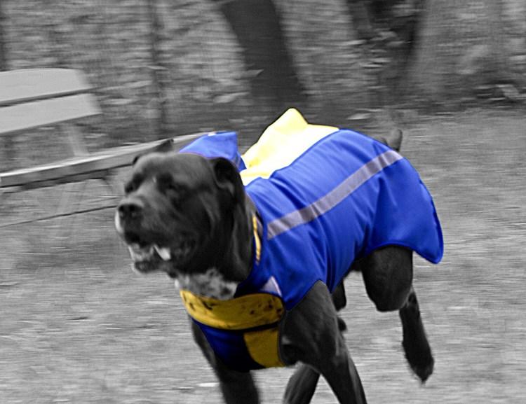 Schutzweste für Jagdhunde