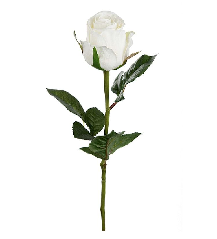 Vit ros