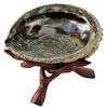 Abalonesnäcka med en ställning i trä.