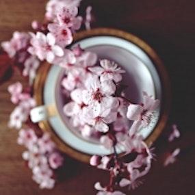 Magnoliagreen.se