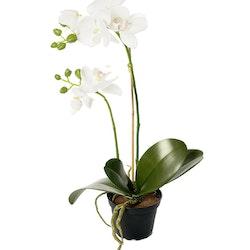 Orkidé Siden 45 cm
