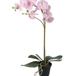 Orkidé siden Kruka 60 cm