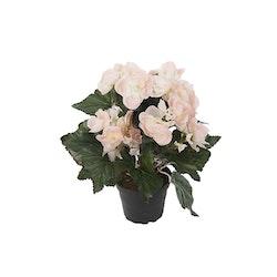 Begonia Siden Ljusrosa