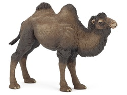 Kamel (Papo)