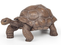 Galapagossköldpadda (Papo)