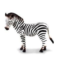 Zebra  (Collecta)