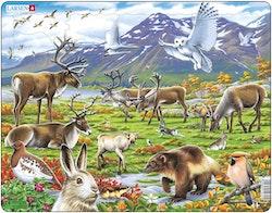 Tundra 50 bitar