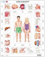 Vår kropp