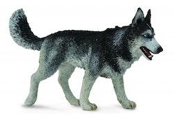 Siberian husky (Collecta)
