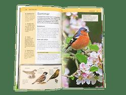 Trädgårdsfåglar i fickformat