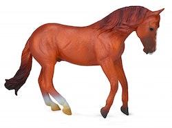 Australian stock horse hingst  (Collecta)