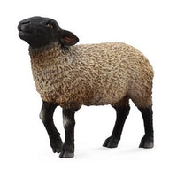 Suffolk får (Collecta)