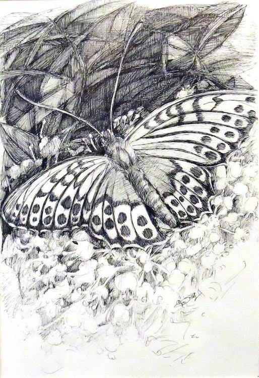 pärlemorfjäril