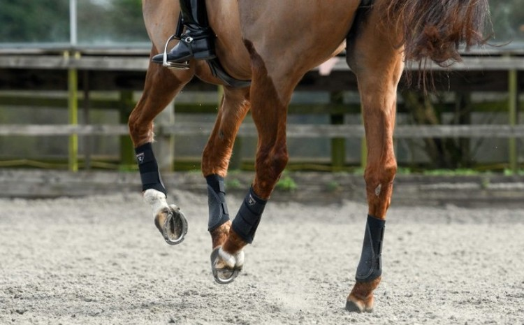 Tri-Zone Brushing Boots Equilibrium