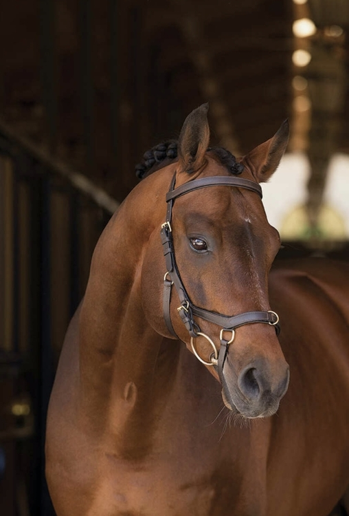 Horseware Rambo Micklem multihodelag brun cob