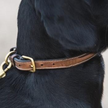 Halsband Arezzo