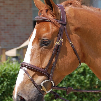 Dyon Flash Anatomic Working bridle, komb nesereim