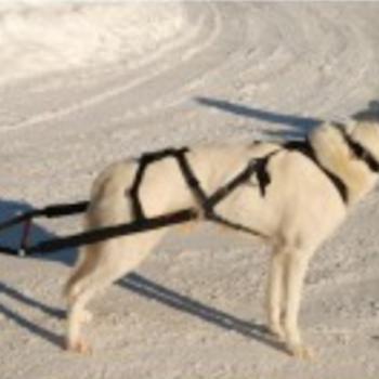 KOMBITREKKSELE BAKSTYKKE - svart reflective - one size stor hund