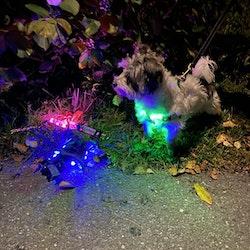 LED-Lys sele til hund (rosa, grønn eller blå)