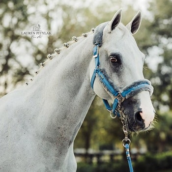 Grime og leietau Parisian Blue - Equestrian Stockholm