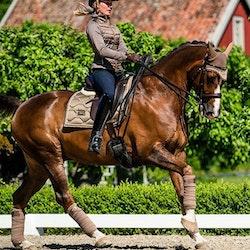 Dressur Schabrack Champagne - Equestrian Stockholm