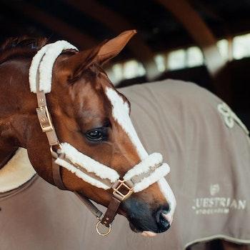 Grime og leietau Champagne - Equestrian Stockholm