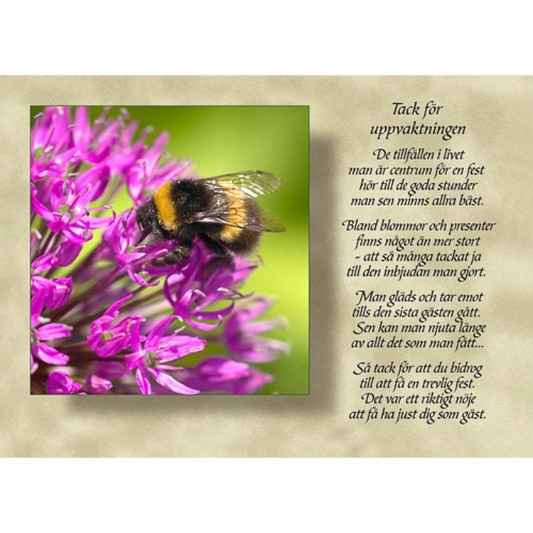 Diktkort med text av Siv Andersson - Tack för uppvaktningen. Foto: Per Johansson. Kortbutiken säljer detta vykort.