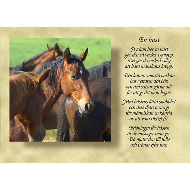 Diktkort med text av Siv Andersson - En häst. Foto: Per Johansson. Kortbutiken säljer detta vykort.
