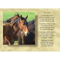 8157 – En häst