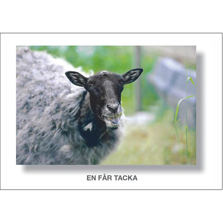 Vykort. Tackkort kort på en fårtacka. Foto: Per Johansson - Joanzon. Kortbutiken säljer detta vykort.