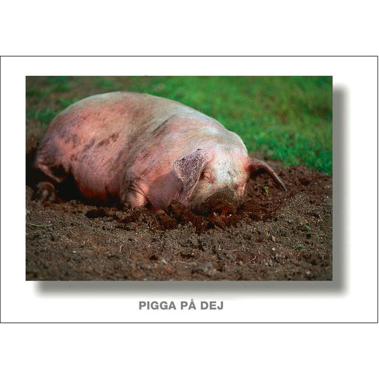 Vykort. Krya på dig kort. Foto: Per Johansson - Joanzon. Kortbutiken säljer detta vykort.
