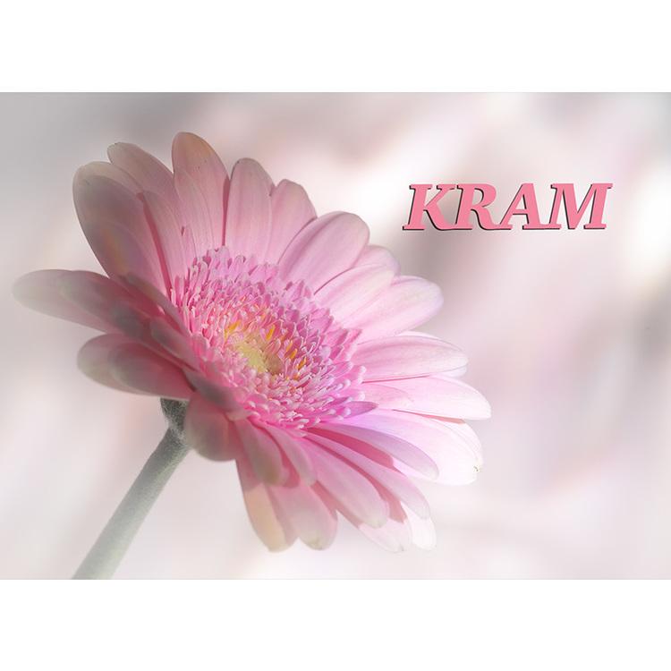 4043 – Kram / rosa gerbera
