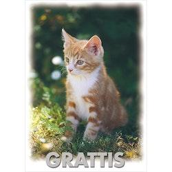 Grattis - kattunge