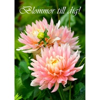4306 – Blommor till dig!