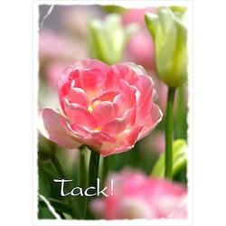 Tack - rosa tulpaner