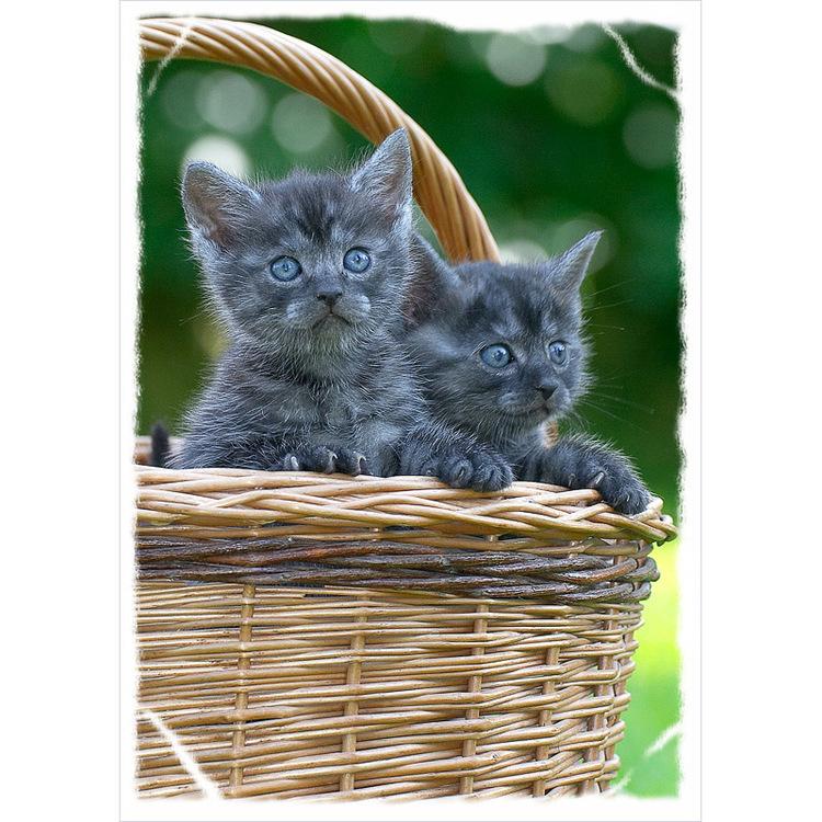 4350 – Katter i korg