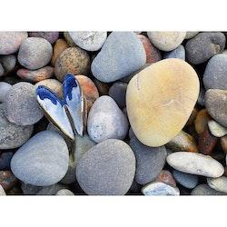 Hjärtformad mussla på stenstrand