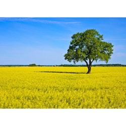 5061 – Träd i Sverige