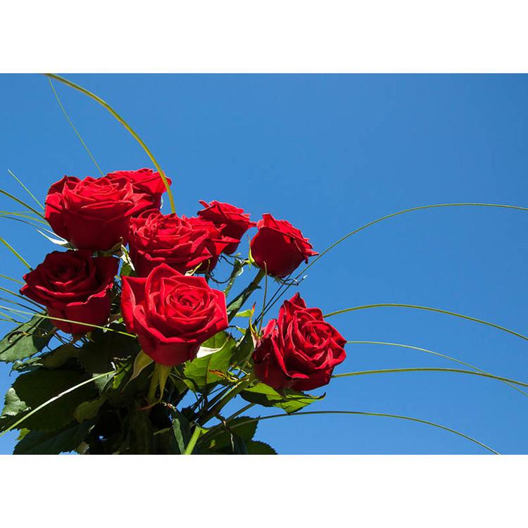 Röda rosor mot blå himmel
