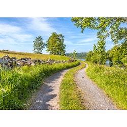5078 – Landsväg sommarsverige