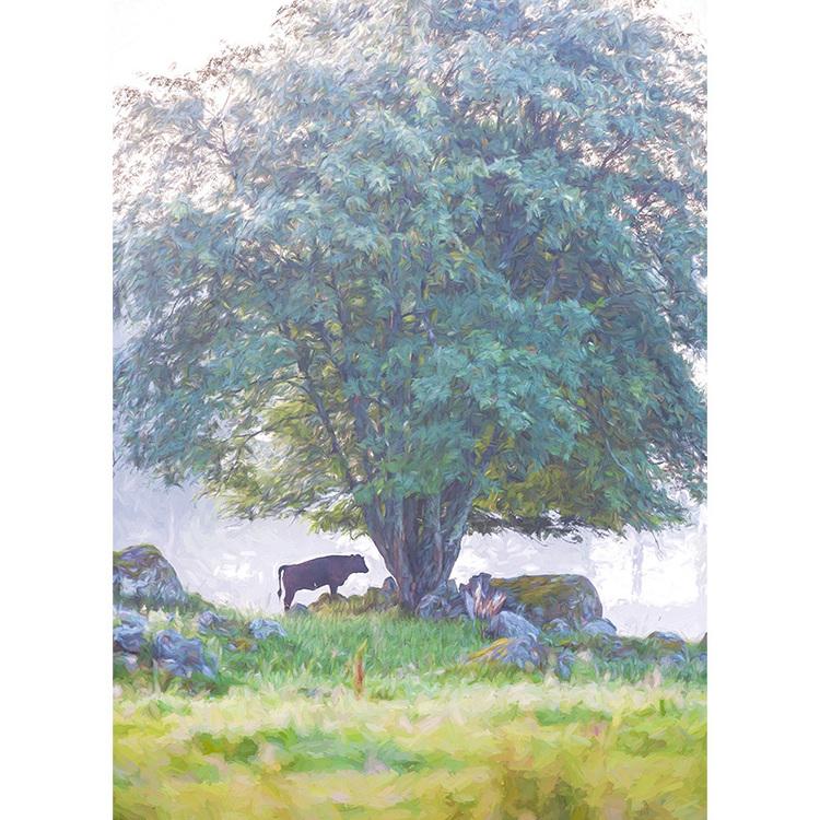 Tjur under träd (Ferdinand)